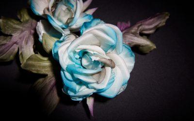 Roses azurées – Résultat
