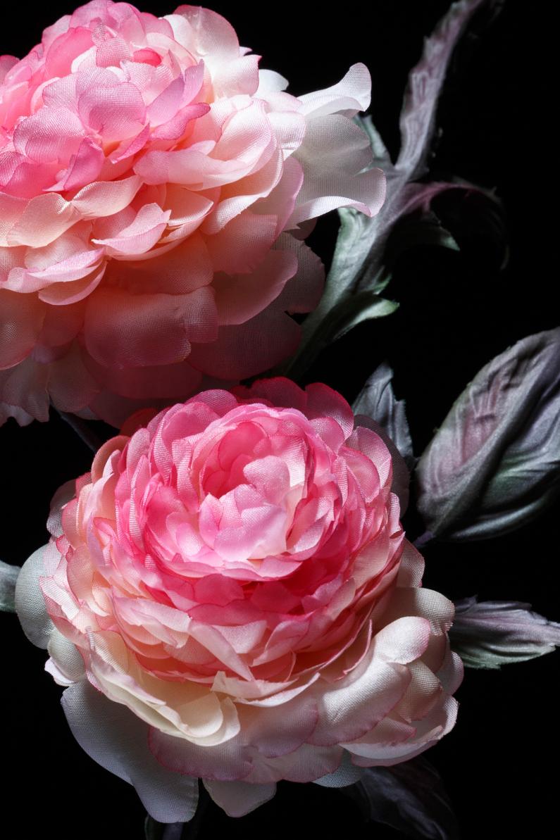 rose-6-detail-1-blog