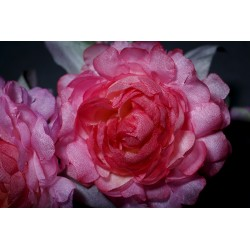 Broche Fleurs Artisanales Florilège