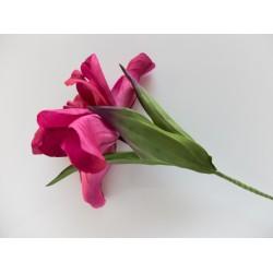 Garnet Iris