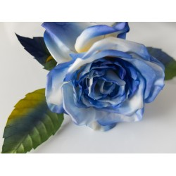 Blue and Yellow Rose