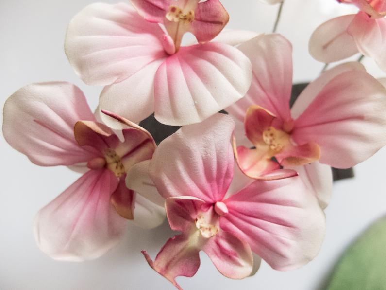 Orchidée de soie