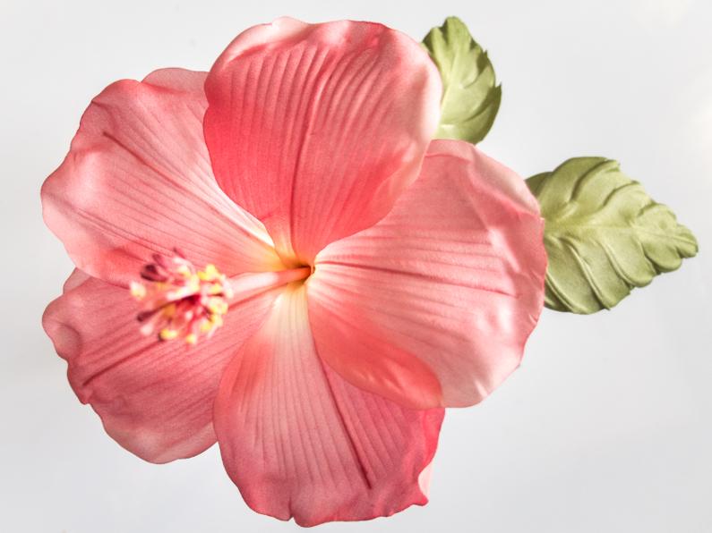 Bel hibiscus rouge
