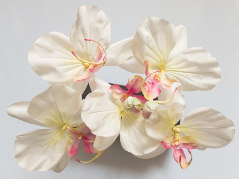 Luxueuses orchidées
