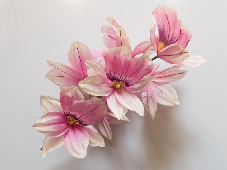 Orchidées roses et violettes