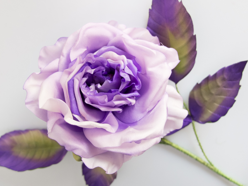 Plum silk rose
