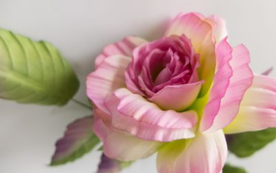 Rose d'été