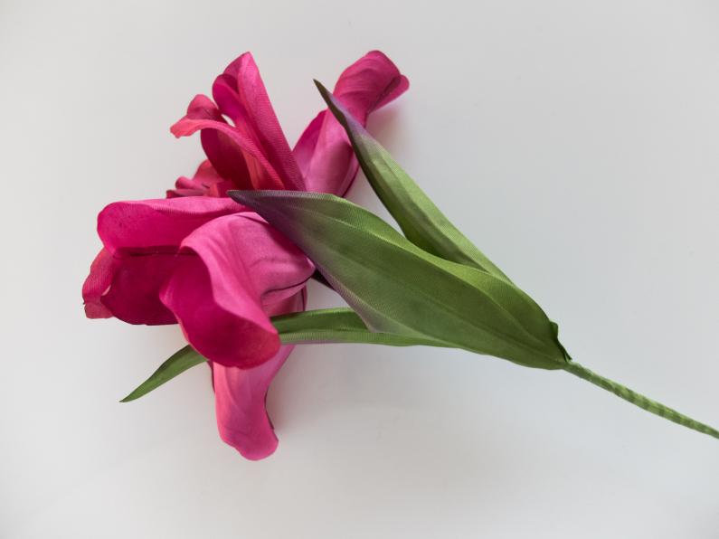 Silk Iris